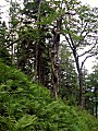 pohľad na kopček so stromami:)