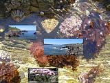 život na útesoch v Írsku