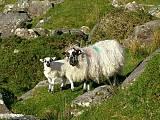 írske krásavice v originálnom irskom kroji :)